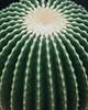 Hampton Court Flower Show - Cactus (Lark Ascending) Tags: cactus succulent plant green prick spnes spiny rows hamptoncourt flowershow