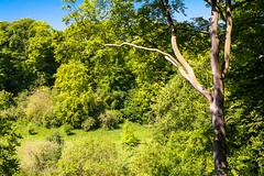 DSC_3077 (Adrian Royle) Tags: lincolnshire louth bimble walk local landscape park path garden