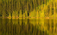 'Transition' (Canadapt) Tags: lake reflection trees pine shoreline pattern shape green shades keefer canadapt