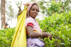 Sri Lanka, tea pickers (66) (walterkolkma) Tags: srilanka tea pickers teapickers centralhighlands nuwaraeliya strathdon teaestates women laborers tamils sonya6300