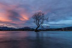 The most photographed tree in New Zealand (sandeepachetan.com) Tags: eelypointrecreationalreserve wanaka newzealand sandeepachetan chetan chetankarkhanis karkhanis photo photography sandeepa sandeepakarkhanis