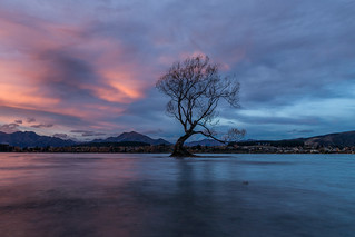 The most photographed tree in New Zealand