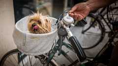 Shabby chic dog (voxpepoli) Tags: