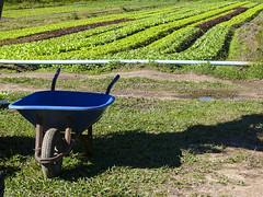 Flinpo - 17-1030427 (J. Adilson) Tags: portoalegre rural hortaliças carrinho de mão