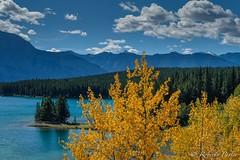 Two Jacks Lake - Banff (robertopastor) Tags: américa canada canadianrockiesmountain canadá fuji montañasrocosas robertopastor viaje xt2 xf1655mm two jacks lake