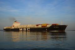 MSC Rossella DST_9390 (larry_antwerp) Tags: nederland netherlands zeeland rilland bath 9065443 schip ship vessel 船 船舶 אונייה जलयान 선박 کشتی سفينة schelde 斯海尔德河 スヘルデ川 스헬더 강 رود شلده سخيلده mscrossella