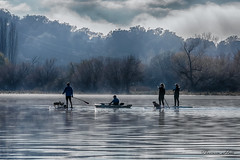 Early morning activity (Theresa Hall (teniche)) Tags: australia canberra lakeburleygriffin mountainslie nikon nikond750 tamrom tamron70200 teniche theresahall fog foreshore lake landscape mist morning morningexercise morningmist water dog dogs wakeboarding wakeboard paddle
