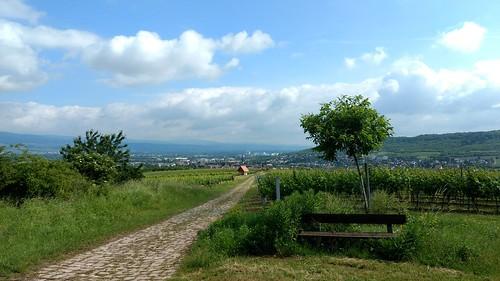 Auf dem Rheinhöhenweg zum Jakobsberg #Rheinhessen #rlperleben