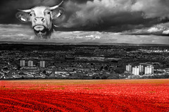 The SkyCow is Watching You