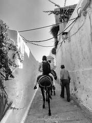 Hop hop donkey ! ✔️ Happy Weekend 😘 (Sound_of_happiness) Tags: monocromo monochrome trip greece fotografiabiancoenero picture biancoenero inexplore blancoynegro bw blackandwhitephotography 2016 vacation beautiful europe grecia rodi