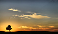 tree sunset (Neal J.Wilson) Tags: nature tree sunrise sunset sky clouds simple denmark danishlandscapes danish dusk scandinavia nordic glow silhouette