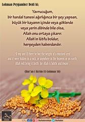 Kerim Kur'an - 31 Lokman Suresi 16. (Oku Rabbinin Adiyla) Tags: allah kuran islam ayet ayetler sure sureler dua dualar kitap book holyquran holybook bible god religion verse