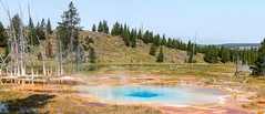 Morning Blue (Ron Drew) Tags: nikon d800 yellowstone yellowstonenationalpark wyoming usa hotspring uppergeyserbasin morning summer trees park thermalfeature americanwest landscape outdoor hills