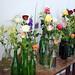 Ruže 2017 - medzinárodná výstava Ivanka pri Dunaji