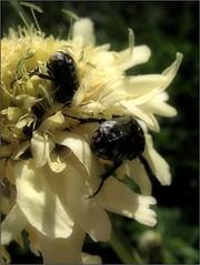 (Tölgyesi Kata) Tags: növényrendszertanigyűjtemény systematicalcollection phylogeneticplantcollection vácrátótibotanikuskert nemzetibotanikuskert botanikuskert botanicalgarden withcanonpowershota620 vácrátót summer nyár rovar insect