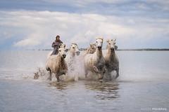 Camargue Horses II (Antoni Figueras) Tags: camargue horses whitehorses sea rancher saintesmariesdelamer france