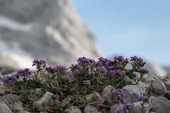 expo-8344 (ernst.scherr) Tags: rot adamekhütte gosau dachstein salzkammergut gletscher schnee natur mondaufgang mondlicht sonnenuntergang alpen pflanzen