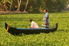 DSC_9255 (Tartarin2009) Tags: waterplant canal water jacyntedeau kerala allepey backwaters boat bateau travel nikon d600