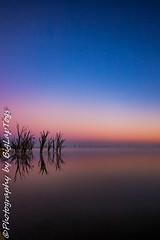 IMG_5538 (biglaptogs) Tags: barmera lakebonney riverland sa states sunsetsunrise