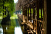 20170527-IMG_5585 (Wo Ai Pai) Tags: 6d ef100mm f28l macro canon is usm water 上海 公園 森林 淺景深 濕地 綠蔭 郊野公園 鳥