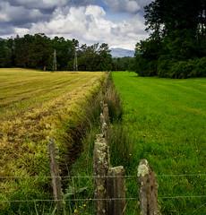 campo verde (kitfisto) Tags: choshuenco campo green country middle symmetric simetria simetrico verde paisaje