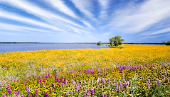 Coneflower Prairie (brian.pipe) Tags: nikon d500 17 50 sigma hagerman national wildlife refuge grayson county texas tx lake texoma