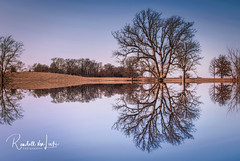 Bare Reflections (myoldpostcards) Tags: abstract horizontal symmetry alteredreality mirrored reflection trees landscape nature rural country field golden water stream creek branch southfork lickcreek campbellcemetery road rd sangamoncounty centralillinois illinois il myoldpostcards randall randy vonliski season winter sunlight light sky sunset goldenhour barereflections canon eos 7dmarkii