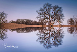 Bare Reflections