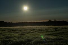 Golden smooth (Ludwig Ohlson) Tags: finland scandinavia sunrise samyang 50mm xe2 fujifilm nordic summer midnightsun nature sun motljus