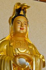 A DI DA PHAT QUAN THE AM BO TAT DAI THE CHI BO TAT GUANYIN KWANYIN BUDDHA 9162 (ketnoivietnam) Tags: amazing affectionate amitabha architecture art asia avalokitesvara awesome bangkok beautifull beijing palace bhutan bodhisattva bouddha buddha tooth relic temple buddhism buddhist china chinatown chua excellent fantastic flickraward gold golden guanyin hainan hdr history hong kong indian information japan korea kuanim kuanyin kwanyin laos laughing 佛 观音 観音 寺