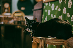 (Sun_Huang) Tags: cat tainan 台南 貓咪 鹿早五金小賣所 店貓 生活 日常 日記 小店 store life