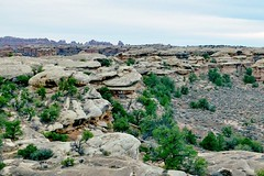 Topography (Neal3K) Tags: canyonlandsnationalpark utah desert geology landforms rocks desertplants