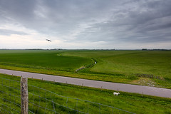 Typical Dutch landscape - Texel 2017 (Wilma v H - Thanks so much 4 your lovely comments/) Tags: dutchlandscape dutchdykes waddijk waddeneilanden waddenzee deschorren texel oosttexel decocksdorptexel sheep skies clouds crackofdawn noordholland northholland landscape rural farmland dutchfarmland texelfarmland greenfields birds nederland netherlands luminositymasks canoneos60d tokinaatx1228f4prodx tkactionsv5panel