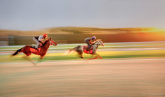 Training Ride at Sunrise (JDS Fine Art Photography) Tags: horses horseracing racetrack training sunrise competition speed fast intensity race panning