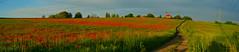 Wojkowice - poppy field (ChemiQ81) Tags: 2017 polska poland polen polish polsko chemiq польша poljska polonia lengyelországban польща polanya polija lenkija ポーランド pólland pholainn פולין πολωνία pologne puola poola pollando 波兰 полша польшча sky outdoor trails kwiaty polne field flowers mak maki spring wiosna jaro wojkowice zagłębie dąbrowskie zagłębiowskim szlakiem dabrova basin poppy