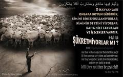 Kerim Kur'an - Yasin 72-73. (Oku Rabbinin Adiyla) Tags: allah kuran islam ayet ayetler ayetullah hadis hadisler dua dualar zikir cami muslim rahman pray hayvan hayvanlar animals animalplanet kurban koyun keçi inek farm