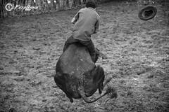 Jinete (Alfonso Giraldo) Tags: arauca colombia llanosorientales llanoscolombianos jinete cowboy llanero vaquero blancoynegro