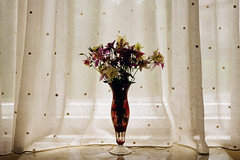 (analogrem) Tags: flowers flower vase rural country curtain window analog film dotted dots translucent lace crystal stillife still life bouquet grandma