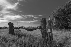 Father's Day Tour Continues (thefisch1) Tags: monochrome black white field fence post wire barbed cloud sky corrked horizon tree pasture