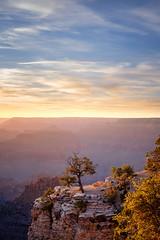 Grand Canyon Sunset (BrianEden) Tags: rock macphun color sunset xpro2 nationalpark luminar evening fujifilm outcropping grandcanyon travelphotography travel grandcanyonvillage fuji sky arizona tree portrait cliff az unitedstates us