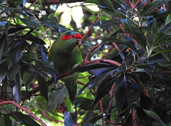 Adelaide Botanic Garden (set of 9) (Lesley A Butler) Tags: sa autumn australia adelaidebotanicgarden adelaide