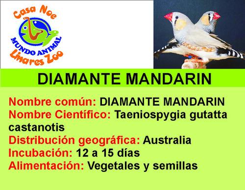 diamante mandarin