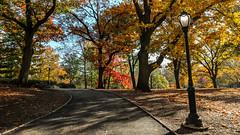 Otoño en el Central Park (Autumn at Central Park) (Gastón Iván) Tags: canon eos t6s central park nyc ny otoño autumn trees arboles amarillo yellow farol streetlight