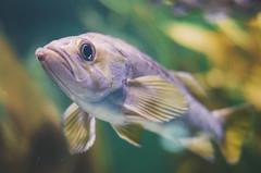 (onapaperplane) Tags: baltimore aquarium squirrel fish eyes fisheye blue aquatic under sea moon jellyfish touch tank lxc lots arapaima scales amazon water