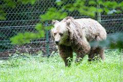 IMG_0553.jpg (wfvanvalkenburg) Tags: ouwehandsdierenpark beer familie