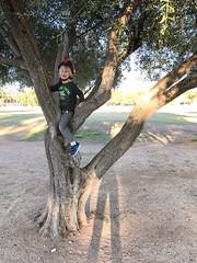 20170301_Shannon_phone_0003.jpg (Ryan and Shannon Gutenkunst) Tags: samhughesfamilynetwork carsongutenkunst treeclimbing himmelpark spikybikehelmet