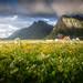 Windy Meadow