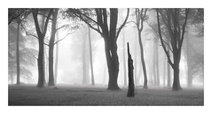 I'm a remainer (Nick green2012) Tags: woodland dartmoor fog silence 21 landscape