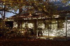 mansfield, victoria (J.K.Stevens) Tags: film 35mm nature house kodak portra 800 australia victoria nikon fm2 weathered aged age time dwelling analog manual focus light meter streets suburbs photography landscape fall leaves mansfield