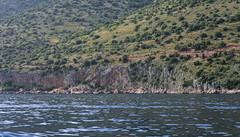 _XIS4691-333 (jozwa.maryn) Tags: brač croatia chorwacja adriatic adriatyk